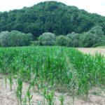 Działka rolna nad Sanem k/Sanoka